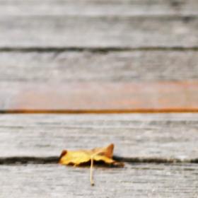 dřevěná lávka v podzimu