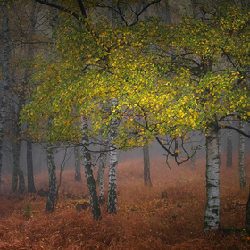...lesy Krušné