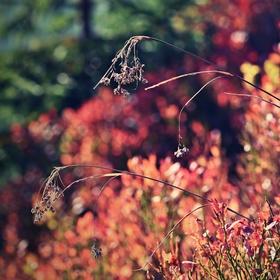 Poklona pro podzimní borůvčí