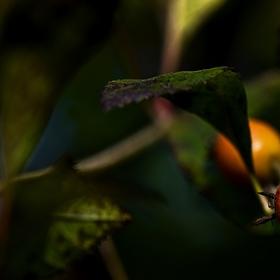 Úsměvy podzimu....