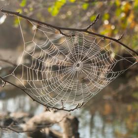 Něžnost v pokročilém podzimu