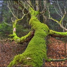 Strom v mechu