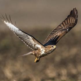 Letí káně letí ...
