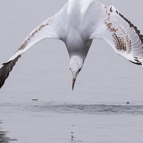 Doteky křídel