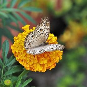 Ještě léto a motýl...