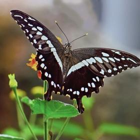 Návštěva motylího domu v Praze