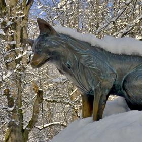 Liška z Beskyd