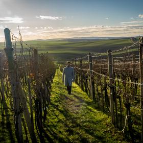Procházka vinohradem