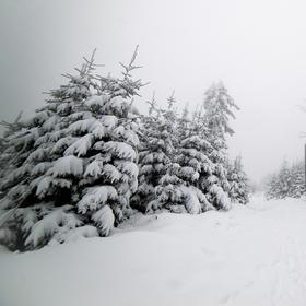 Cestou na Lysou horu