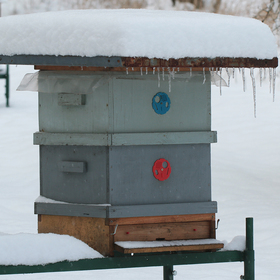Zima na včelnici 2