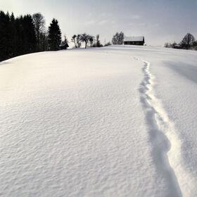 Cestička ve sněhu