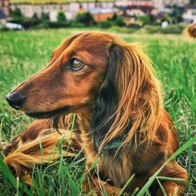 V trávě..