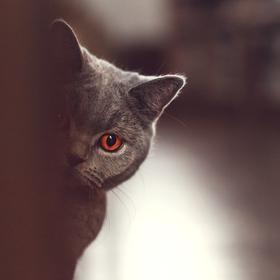 Někdo se dívá