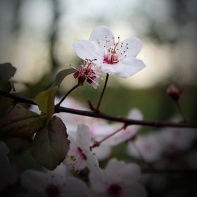 Jaro již brzy...♥ II.