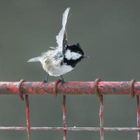 Rozcvička na lehce zkorodovaném plotě
