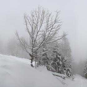 Sněhová peřina
