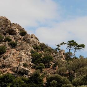 Tři stromy - (ostrov Samos - Řecko)
