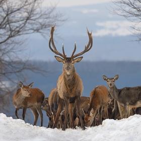 letošní zima v přírodě (10)