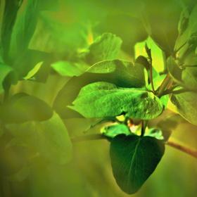 Aprílové zelenání
