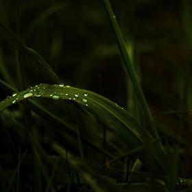 Po jarním dešti
