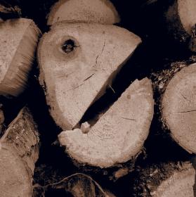I dřevo má svou tvář
