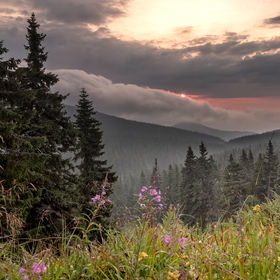 Mlhavé svítání nad Bílou Opavou.