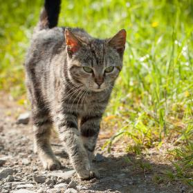 Kotě na lovu