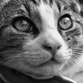 Kočičí kukuč
