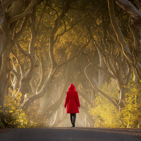 The Dark Red Hedges