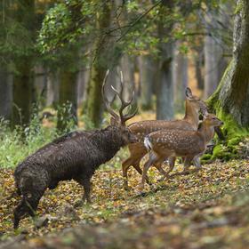 obrázky z podzimního lesa (8)