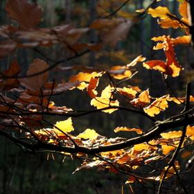 Podzim v listech maluje