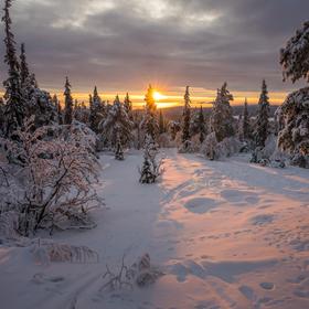 Zimní Laponsko