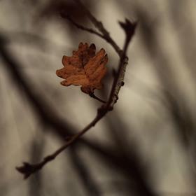 Pochmurný podzim