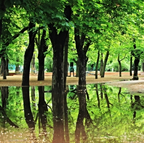 ranna prechadzka v letenskom parku