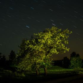 Strom v noci...