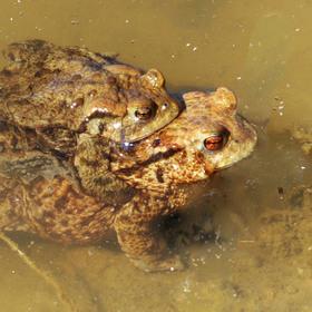 Hlavňovský rybník zblízka II