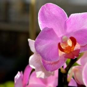 Orchidej :)