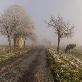 Cestou kolem pastvin