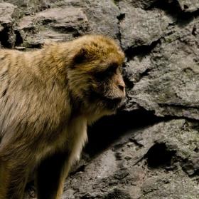 Kompozice s makakem