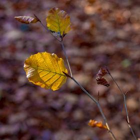 Podzimní barvy 3