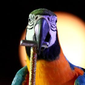 Papoušek s koloběžkou