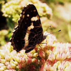 Jsem Motýl