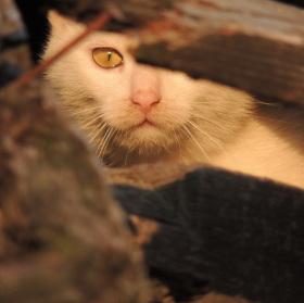 Kočka schovaná ve střeše