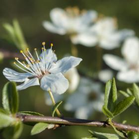 Příchází jaro