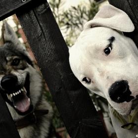 Strach z vlka