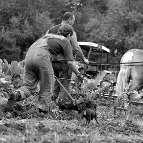 Sklízení úrody