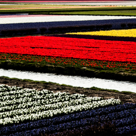 Fields of colors