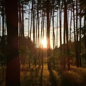 Svit mezi stromy