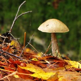 V lese...