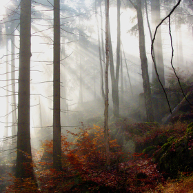 Podzim v listnatém lese
